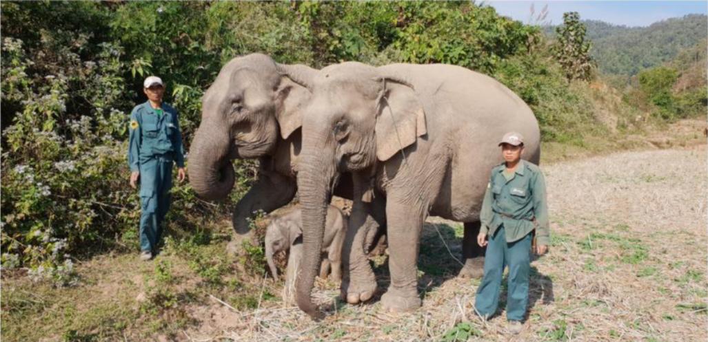 Centre de conservation des éléphants - Laos